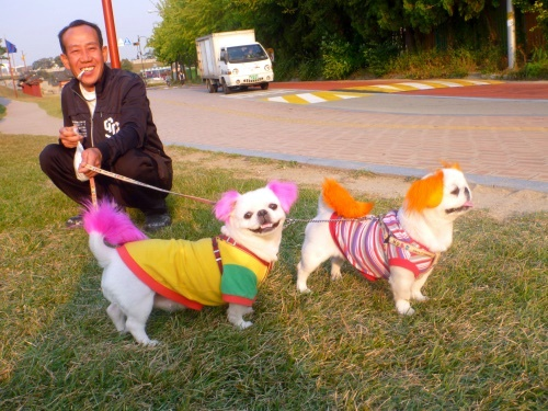 Korean dogs, orange backpack, doggy style